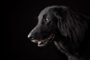 chien-meilleur-ami-homme