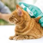 Vaccination et mutuelle pour chat