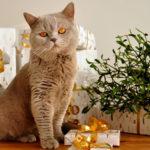 Offrez un cadeau pour votre chat