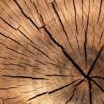 Comment abattre un arbre à l'aide d'une scie à chaîne ?