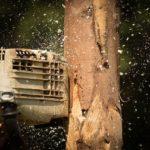 Couper et débiter son bois de chauffage avec la tronçonneuseHusqvarna120 Mark II